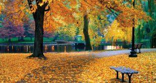 fall- days-Garden